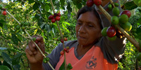 Coffee producers lead fight against cancer in Nicaragua