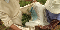 Bolivians depend on coca plant despite anti-drug efforts