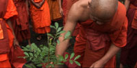 Cambodian monks save remote forests, tree by tree