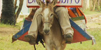"""Biblioburro"" – a donkey library – visits Colombian children"