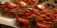 Joint Israeli-Palestinian project plants strawberry fields