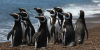 A love affair between tourists and penguins in Patagonia