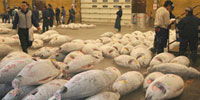 Japanese government says it would defy bluefin tuna ban