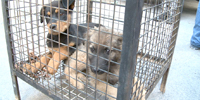 Jordanian advocate fights against puppy mills